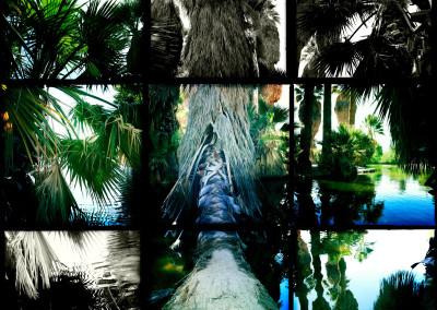 Agua Caliente 03