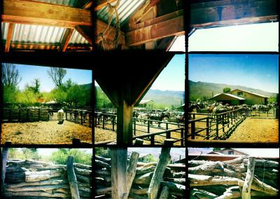 Horse Ranch 01