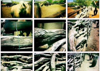 Horse Ranch 02