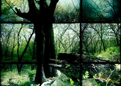 Kansas Woods 01
