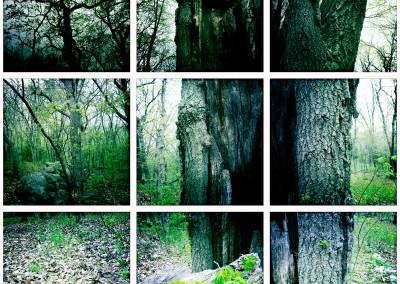 Kansas Woods 02