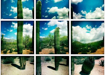 Saguaro Quartet 01