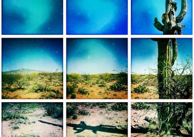 Vail Saguaro