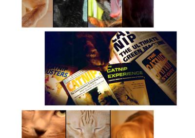 Catnip: Egress to Oblivion? - EPK 06