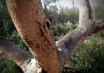 Pine Corpse by Jason Willis