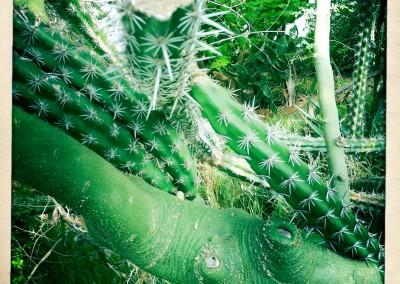 iPhone Hipstamatic: Biosphere II - 06 by Jason Willis